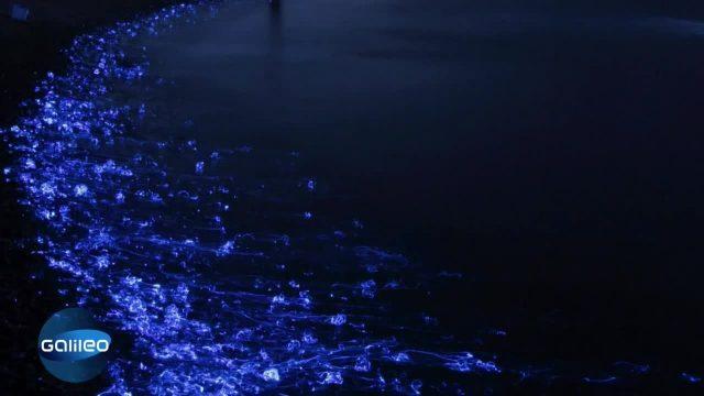 Bilgeschichte: Leuchtende Tintenfische