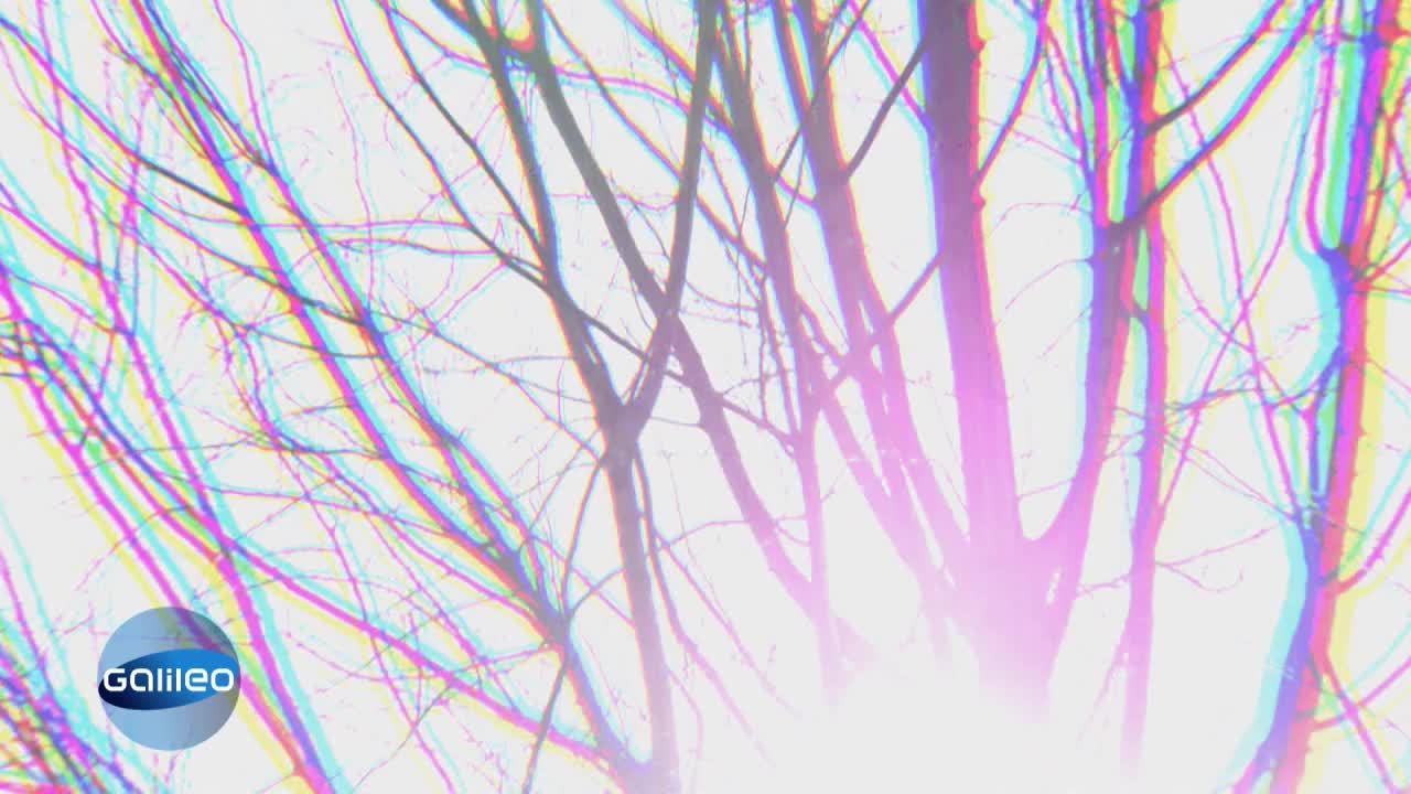 Entspiegelter Display - Wenn die Technik bei der Natur spickt
