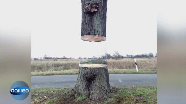 Webphänomen: Schwebender Baum