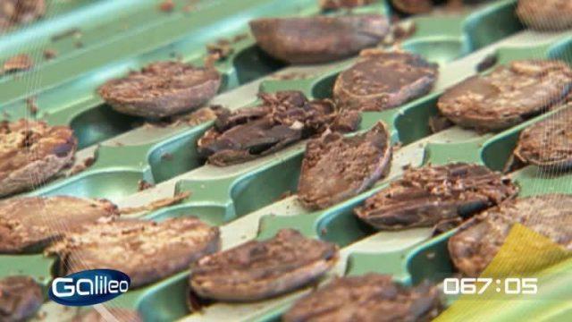 100 Sekunden: Kakao