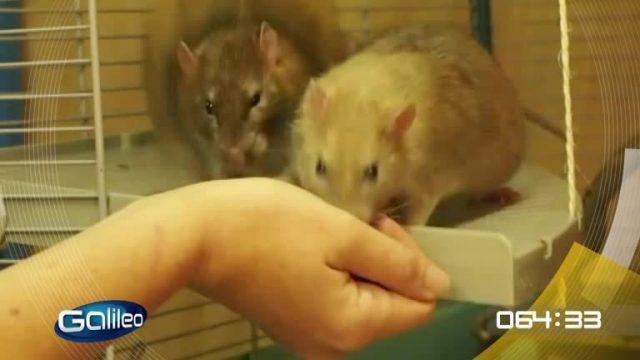 100 Sekunden: Tierische Verbrechensbekämpfer