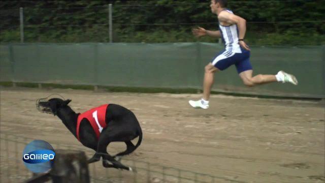 Beat the beast - Windhund