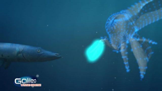 Bild Geschichte - Leuchtende Tintenfische