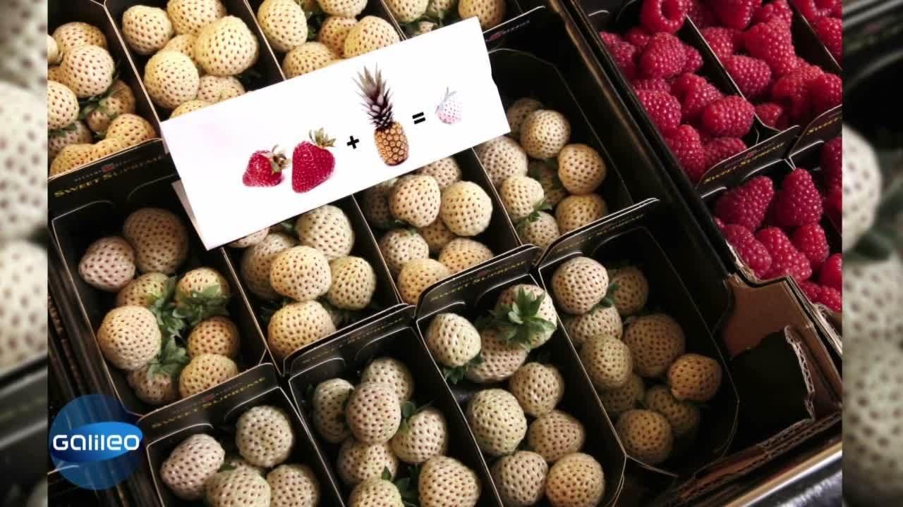 Bild Geschichte - weiße Erdbeere