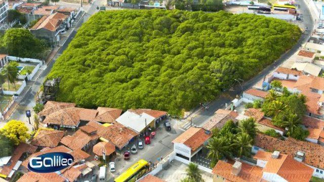 Bildgeschichte Einbaumpark
