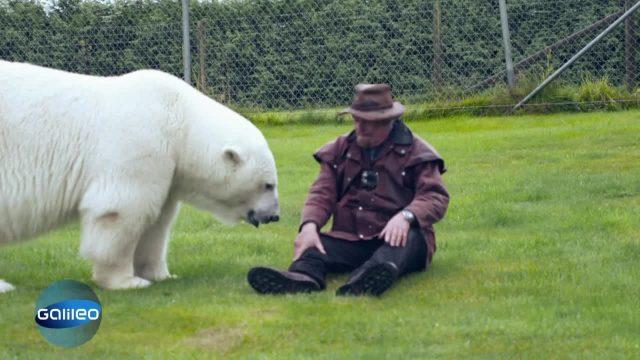 Bildgeschichte: Eisbär im Pool