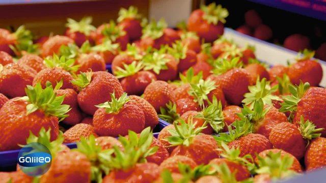 Der Weg der Erdbeere