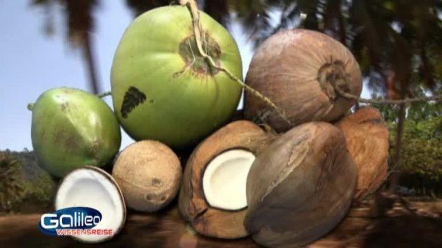 Der Weg der Kokosmilch