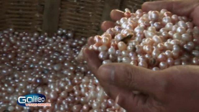 Der Weg der Perle