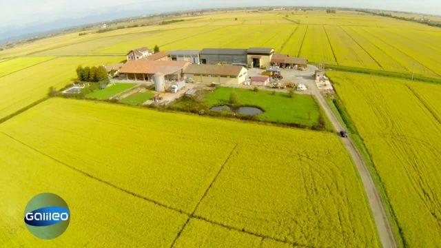 Der Weg des Reis - Made in Italy