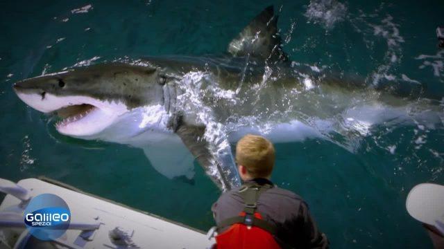 Die Hai-Retter