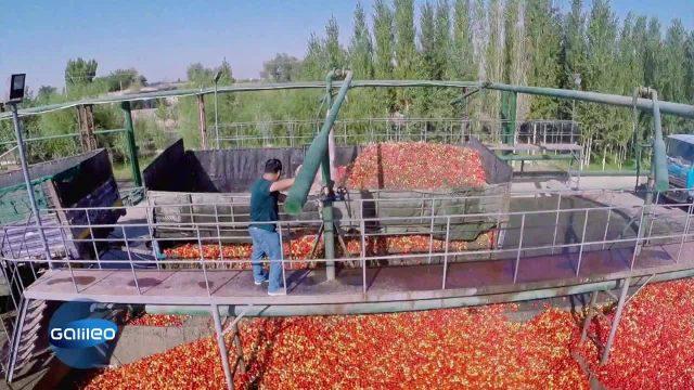 Die Herstellung des beliebten Tomatenketchups
