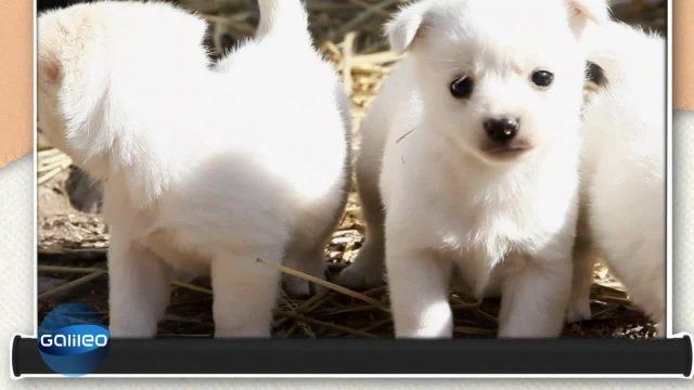 Die schräge Wahrheit: Hunde