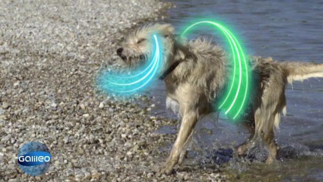 Highspeed: Warum Hunde so schnell trocknen