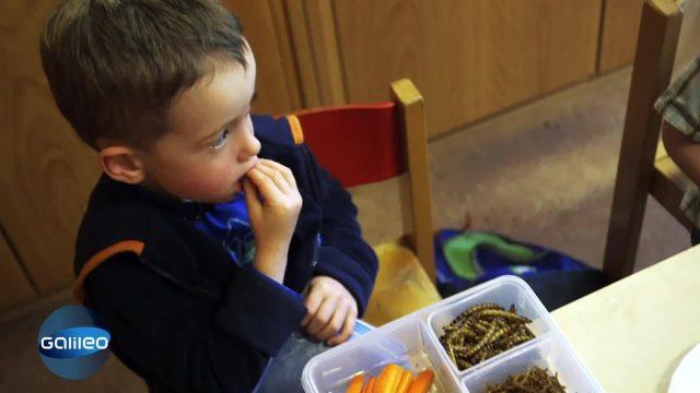 Junge isst Insekten