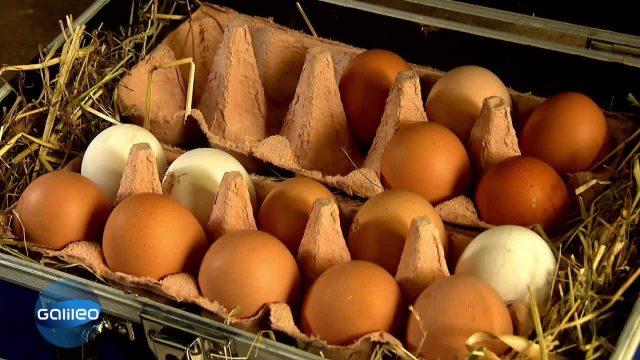 Mensch brütet Ei aus