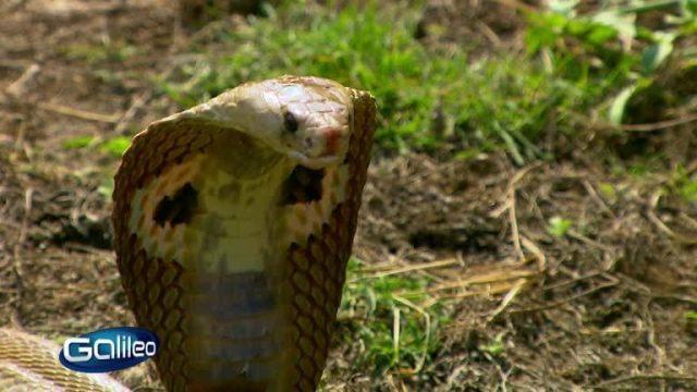 Und was jetzt? Schlangenangriff