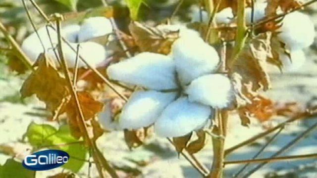 Vier Pflanzen, die die Welt veränderten