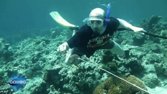 eXtrem - Leben bei den Seenomaden