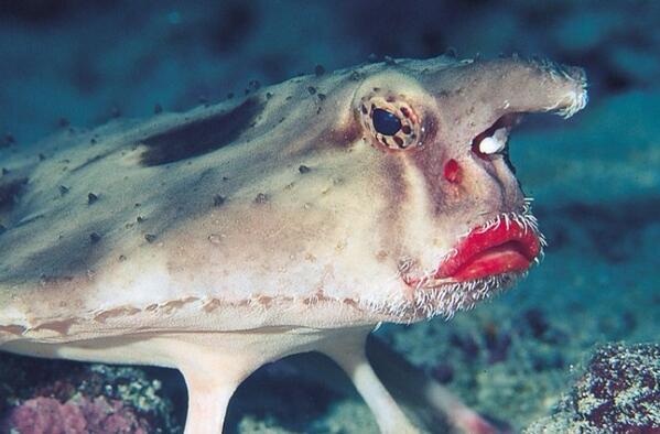 Fisch Mit Dicken Lippen