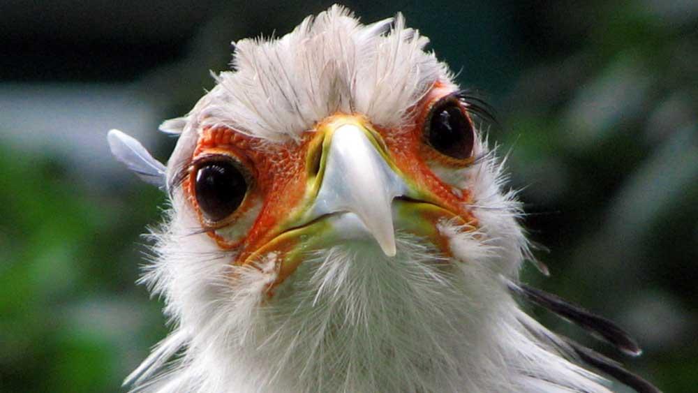 Darum brauchen Vögel keine Ohrmuscheln