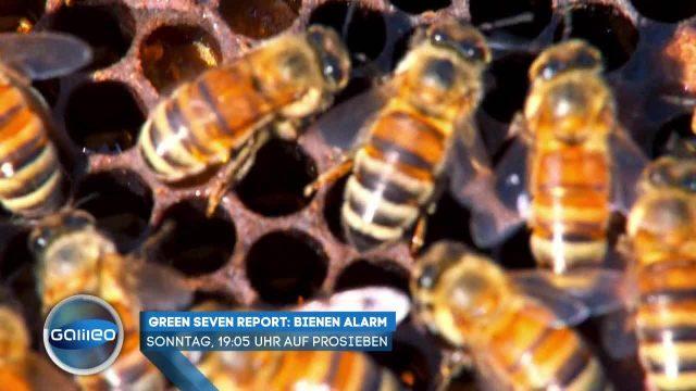 Wissenswerte Fakten rund um die Biene
