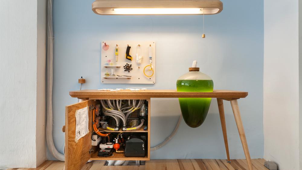 m bel mit k pfchen in diesen glasgef en leben essbare algen. Black Bedroom Furniture Sets. Home Design Ideas