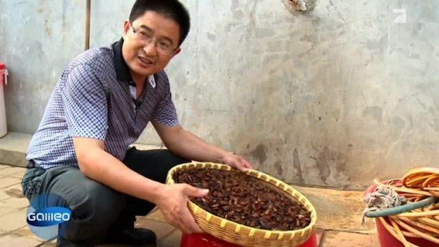Mit Kakerlaken Millionen verdienen