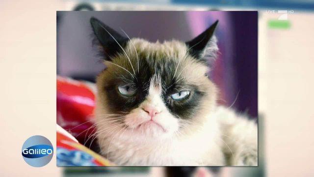 Grumpy Cat - Wie ein Tier Millionär wurde