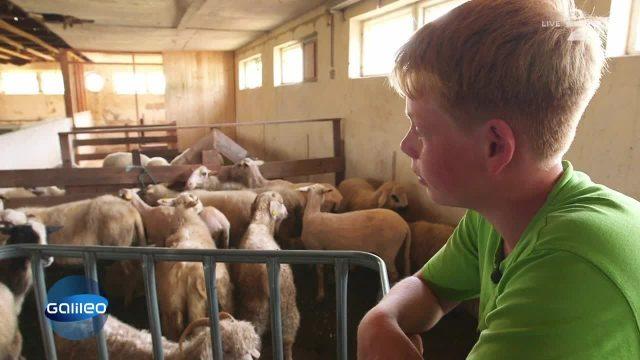 Junge mit 120 Tieren