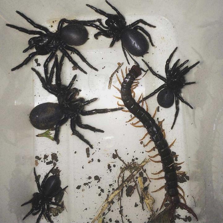 Spinnen Im Garten: So Sieht Es Aus, Wenn Ein Australier Seinen Garten Aufräumt