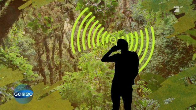 Handys retten den Regenwald