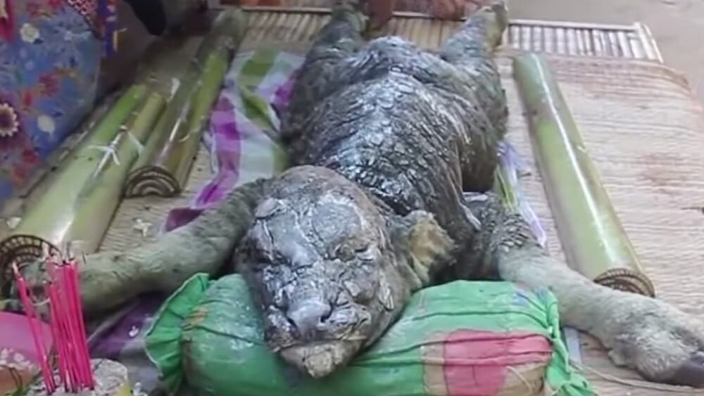 b ffel krokodil mysteri se kreatur in thailand entdeckt. Black Bedroom Furniture Sets. Home Design Ideas