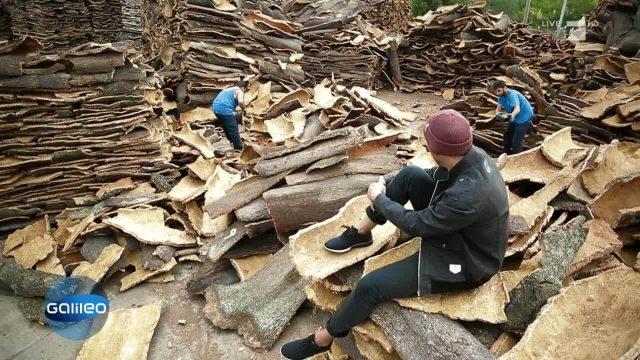 Der tragbare Baumstamm