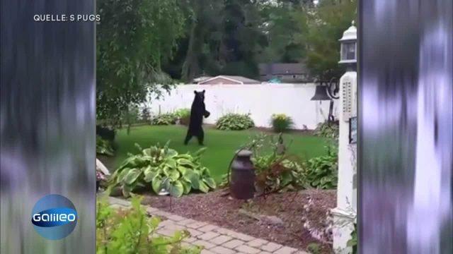 Spektakuläre Bärenrrettung