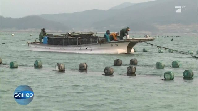 Die Algenbauern von Südkorea