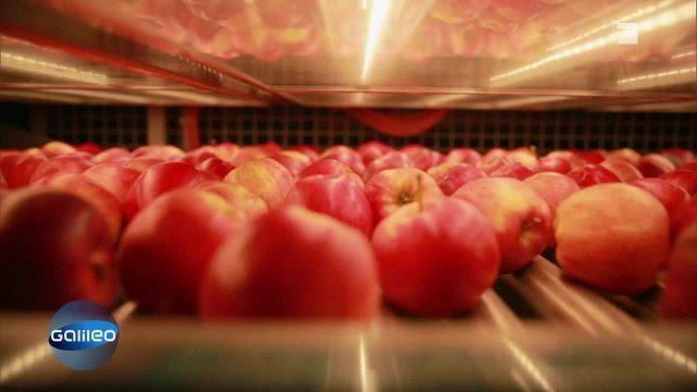 Wie kommen die Topmodels unter den Äpfeln zustande?