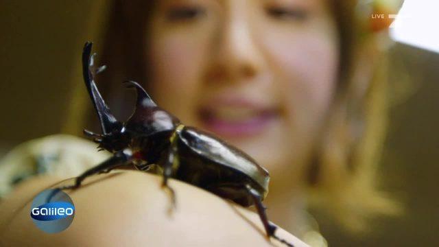 Käfer-Hype in Tokio