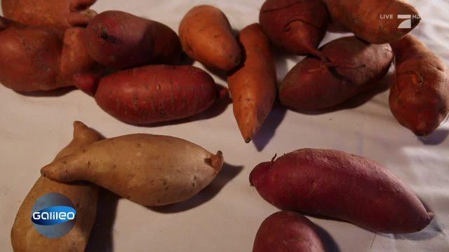 Nährstoffwunder Süßkartoffel