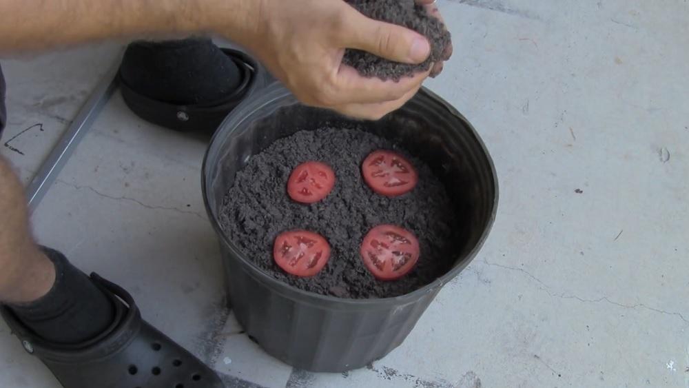die einfachste methode tomaten anzupflanzen. Black Bedroom Furniture Sets. Home Design Ideas