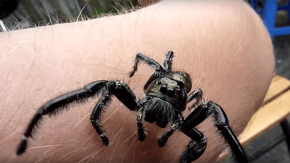 spring und krabbenspinnen das ist der grund f r die neue. Black Bedroom Furniture Sets. Home Design Ideas