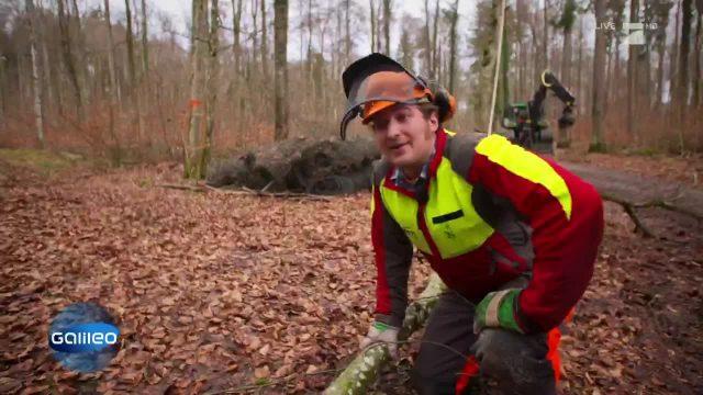 Die fünf wichtigsten Geräte eines Waldarbeiters