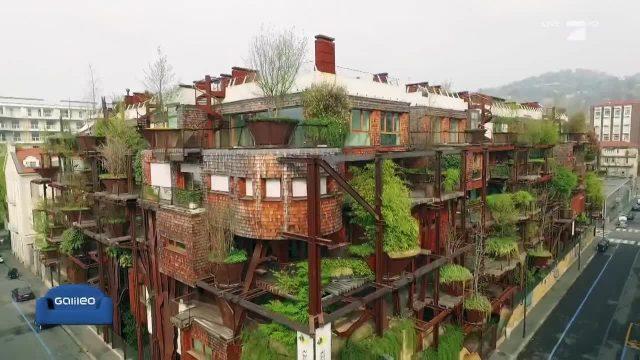 Leben im urbanen Baumhaus
