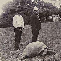 Die älteste Schildkröte