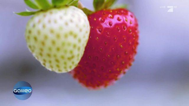 Die Superkräfte von Erdbeeren und Co.