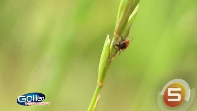 Insektenmythen