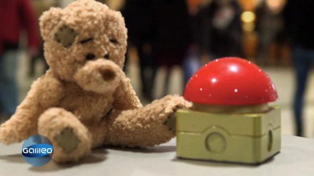 Schlaumeier: einen Bären aufbinden