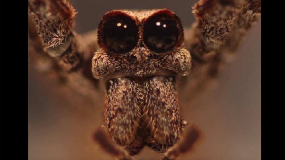 Diese Spinne Sieht Aus Wie Ein Alien