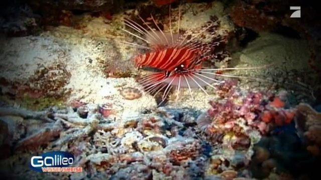 Ort der Woche: Great Barrier Reef