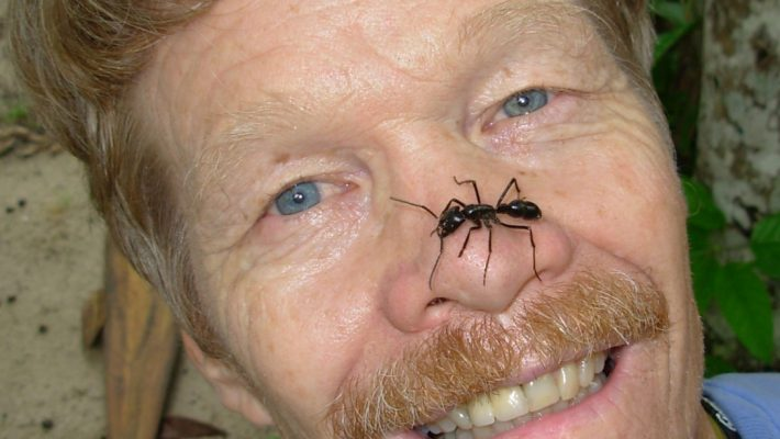 Größte Ameise Der Welt